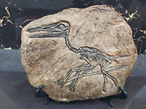 Fossils Resin Jurassic Wall decoration | Replica Wall decor Dinosaur Fossil Keichousaurus Dinosaur archaeopteryx fossilized bird