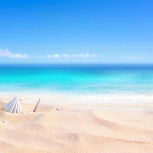 Cena Pet Areia Shell Tropical Sea Beach Coral Blue Sky Verão do feriado do bebê fotográficos Fundos Foto Backdrops Photo Studio