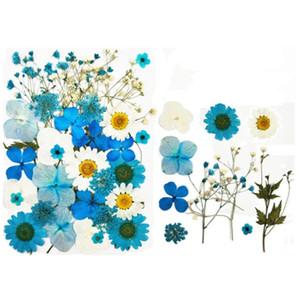 Fleurs séchées Pressé naturel sec Conservé fleur pour le bricolage Crafting Scrapbooking Carte Invitation Bookmark cas de téléphone