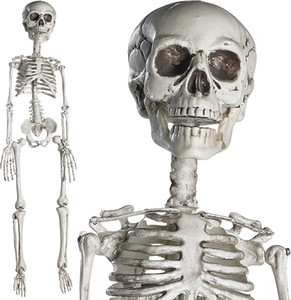Prextex Halloween Halloween Skeleton 15.8 pollici Full Body Skeleton- con mobile Giunti per la migliore decorazione di Halloween