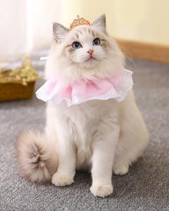 벨 귀여운 레이스 애완 동물 두건 고양이 두건 애완 동물 턱받이 목도리 애완 동물과 함께 2019 새로운 도착 패션 개 고양이 턱받이 장식 핫 무료 선박 공급