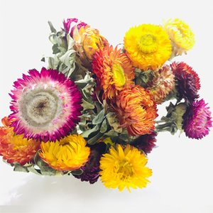 5-8pcs lot Dried Chrysanthemum Flower Bouquet Home Room Desktop Vase DIY Decor Wedding Party Decoration Colorful Dried Flower