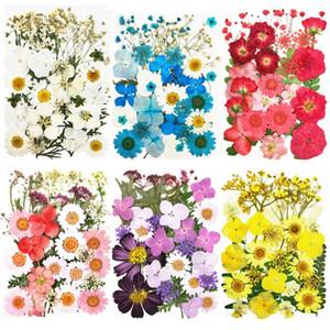 Pressé Fleurs séchées naturel sec Conservé fleur pour la marque de bricolage scrapbooking Boîte-cadeau Carte Phone Case Décoration