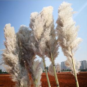 Die neue 20Pcs / lot Großhandel Phragmites natürliches getrocknete dekorativen Pampas-Gras für Haupthochzeitsdekoration Blumen-Bündel 56-60cm