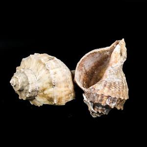 8 CM Natural Conch Shell Deepwater Snail Hermit Crab Seashell Decoração Náutica Decoração de Peixe Aquário Decoração Acessórios H Jllmbu