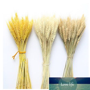 Real Wheat Ear Flower Decoration Natural Pampas Tail Grass Dried Flowers For Wedding Party DIY Craft Scrapbook Bouquet