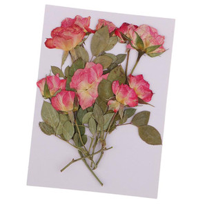 10x Pressed Dried Rose Flowers DIY Phone Case Bookmark Resin Jewelry for Art Paper Making Gift Packaging Materials Craft