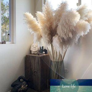 3PCS 55CM80CM Bianco Naturale Reed secco Cerimonia Fiore Big Erba di pampa Wedding Bouquet Flower Decoration decorazione domestica moderna