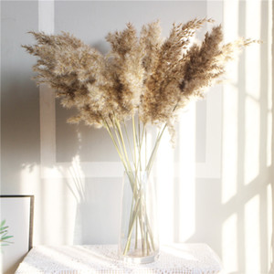 Natural Dried Pampas Grass Phragmites Communis for Wedding Artificial Flower Bunch Home Decor DIY Craft dry flowers decoration