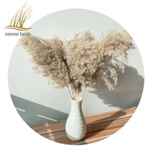 pampas grass decor dried flowers large size natural phragmites tall 19-22 wedding flowers bunch for home party christmas decor T200904