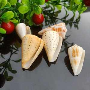 5 шт. Seashells Natural Tabby Shell Conch Countant Nautical Decor Образец Пляж Украшения Браслет Ожерелье DIY Ювелирные Изделия H Jellmya