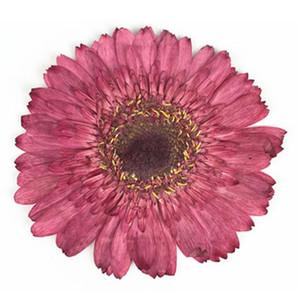 Dia. 8cm Fuşya Gerbera çiçekleri Çerçeveleri numuneler Öğretim Malzeme DIY el yapımı malzeme 1 lot / 10pcs kurutulmuş