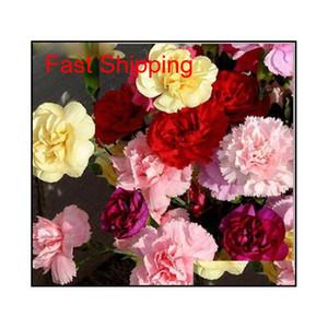 Продвижение 10 цветов доступно гвоздики для гвоздики многолетних цветов горшечные садовые растения Dianthus Caryop Qylpvp Packing2010