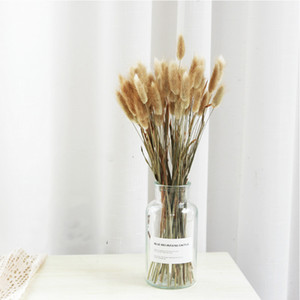 Pampas Grass Thinker 50 Stems Raw Color Dried Rabbit Grass Bouquet Home Weeding Flower Bunny Tail Natural Plants Floral Home Decoration