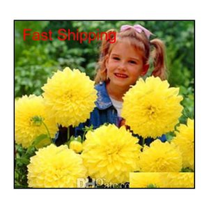 50 шт. Семена многоцветных георгин, цветок георгины, цветок георгины, цветок бонсай для домашнего сада растение горшок высокий Qyldit Packing2010