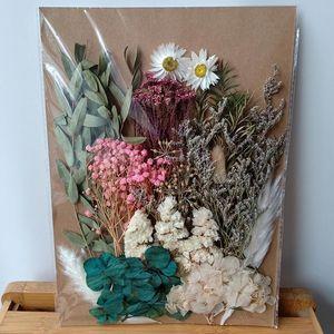 Dongliflower séchées Pressé naturel fleur Matériaux Types mixtes pour le scrapbooking, Cadre de bricolage Artisanat cadeau ou Home Décor