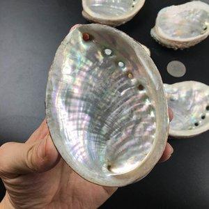 Conchas de abulones naturales Conchas de la concesión de conchas de la casa Paisaje de acuario DIY Decoración náutica Soporte de jabón 9 10 cm Craft Collectable Joyería Holder H JLLLQHR