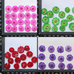 DIY Daisy Specimen Handmade Embossing Manicure Bookmark Mobile Phone Shell Botany Dried Flower Drop Glue Home Decorate Green 0 3gc M2