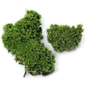 1Pc Artificial Moss Plant Long Plush Stone DIY Miniature Micro Landscaping Home Garden Wedding Decoration Craft Accessories