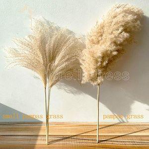 Real Pampas Grass Decor Decor Naturale Fiori secchi Piante da sposa Fiori di nozze Fiore secco Bouquet Fluffy Bella per la casa vacanze Decor Ship Ship