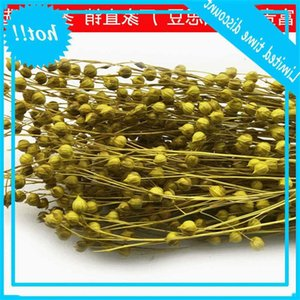 Yunnan Fugui Ölümsüz Çiçek Lover Meyve Acacia Fasulye Multicolor ile Yüksek Kalite DIY