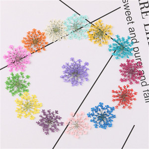 30pcs Set Pressed Dried Majus Flower Dry Plants for Epoxy Resin Pendant Necklace Jewelry Making Craft DIY Accessories GWE4475
