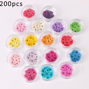 200pcs Lot Dried Narcissus Plum Blossom Natural Flower for DIY Nail Art Craft Accessories Pressed Floral Decals Stickers UV Gel