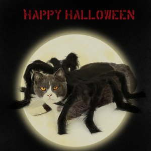 Pet Cosplay Spider for Personality Halloween Dog Fashion Funny Cat Accessories Clothes