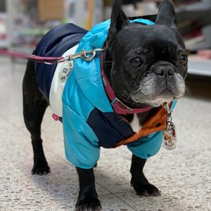Waterproof Big Down Jacket Winter Warm Dog Clothes for Small Medium Large Dogs French Bulldog Pug Hooded Coat Pets Clothing