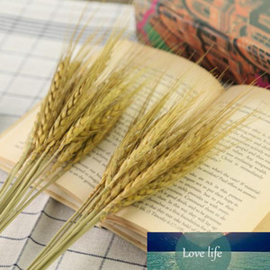 15pcs bunch Natural Wheat Flower 2018 New Real wheat Dried flowers original Ecological photography props wheat Wholesale