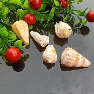 5pcs Seashells Natural Tabby Shell Conch Pendant Nautical Decor Specimen Beach Ornaments Bracelet Necklace Diy Jewelry Making H jllqSz
