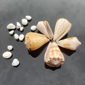 5 шт. Seashells Natural Tabby Shell Conch Countant Nautical Decor Образец Пляж Украшения Браслет Ожерелье DIY Ювелирные Изготовления H SQCWiz