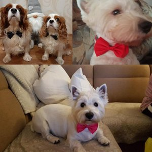 Hot Adjustable Dog Cat Bow Tie pet bow tie puppy Necktie different colors Pets Accessories supply