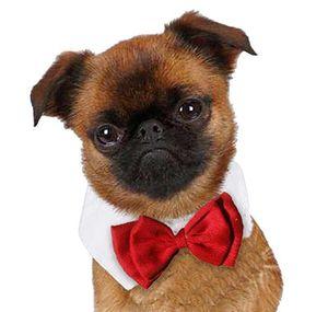Gentleman Dog Bow Ties Pet Adjustable Cat Neckties Butterfly Tie Necktie Collar Decor Acce bbycHQ hotclipper