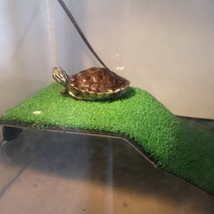 Aquarium Decor Turtle Basking Platform Acrylic Turtle Island Aquariums Moss Clamping Остров для черепах Рептилия Украшения Бака Y200917