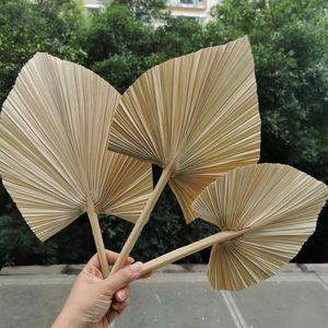 10pcs / 15 * 35cm, getrocknete Natur Fan Palm Blatt, Eternell Display anordnen Blume Craft Startseite Hochzeit Dekoration Foto Requisiten Zubehör 1026