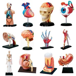 Educational Assembled 4d Human Master Body Skeleton Anatomy Skull Manikin Heart Ear Model Puzzle Medical Science Toys 1008