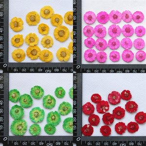 DIY Daisy Dried Flower Handmade Embossing Manicure Bookmark Mobile Phone Shell Botany Specimen Drop Glue Home Decorate Red 0 3gc M2