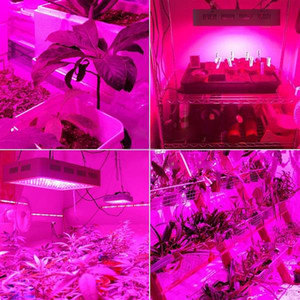 Newest Design square 2000W Dual Chips 380-730nm Full Light Spectrum LED Plant Growth Lamp White Grow Lights wholesale