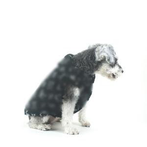 Moda Letter Tasarımcı Pet Coats Kış Kalınlaşmak Desen Schnauzer ceketler Açık Windproof Bulldog Lüks Outerwears Giyim