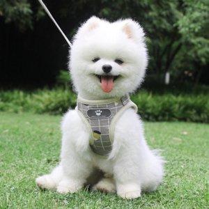 0zrxy PET Yansıtıcı Kafes Çekiş Ropechest Kayış Çekiş Halat Göğüs Kayışı Nefes Köpek Halat Köpek Yaka