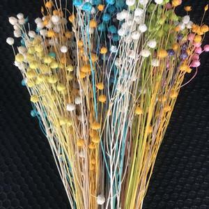 30-35CM 50g Decorative Jequirity Branch,Natural Dried Flowers Bouquets,Mini Fruit Jumble-Beads,Farmhouse Home Decor Accessories 1022