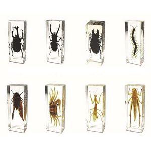 Real 3D Insecto educativo Insecto Especímetro ToysGifts Resina acrílico Errores incrustados Recoger Mouse Transparente Papeles Papeles Niños Ciencia Aprendizaje Kits
