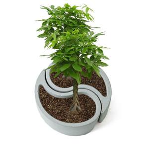 Silikon-Form acht Diagramme Modell Beton Tabletop Composite-Flowerpot Sukkulente Cement Pot Vase Garten-Dekoration C1115
