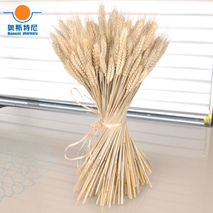 100pcs natural dried flower bouquets natural raw color dried ear of wheat bouquets&wheat ear Bunches 1022