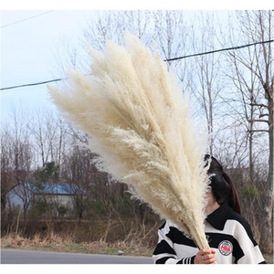 Natural Plant Pampas Grass Large Dried Flower Wedding Special Fluffy Feather Flower Ceremony Decoration Decorati jllsub mx_home
