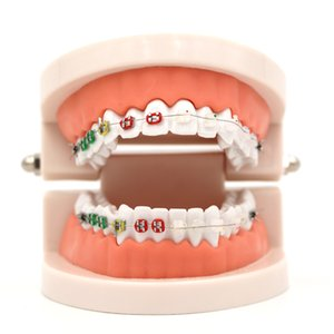 1pc Orthodontic Treatment Model With Ortho Metal Ceramic Bracket Arch Wire Buccal Tube Ligature Ties Dental Tools