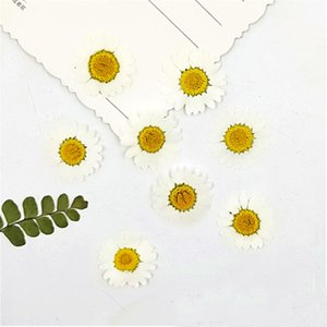 Natural White Chrysanthemum Dried Flower 120Pcs Wholesales For Holidays Gifts Card Decoration Y1128