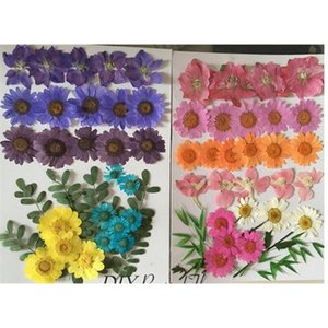 Assorted Larkspur Leaf   Chrysanthemum Blue And Pink Dried Flower Arrangements DIY Phone Case free shipment 2 bags Z1120
