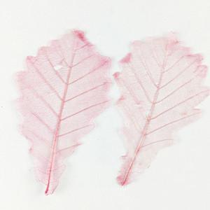 2019 Newest Leaves 7 Different Colors Dried Pressed Flowers Arrangements For Art Paper Decoration 100 Pcs Z1120